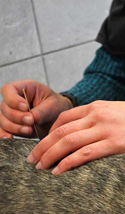 Vétérinaire acupuncture canin NaturOpattes Vienne près de Grenoble et Bourgoin-Jallieu