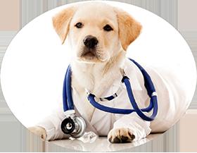 Vétérinaire canin NaturOpattes Vienne près de Grenoble et Bourgoin-Jallieu (38)