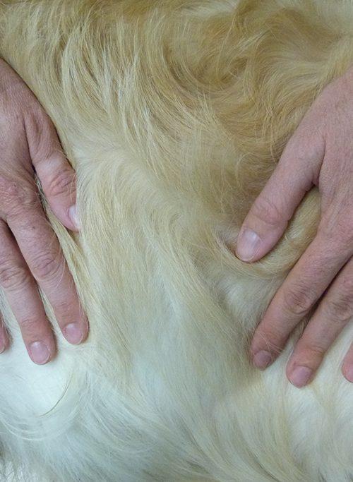 Vétérinaire médecine alternative micro-kinésithérapie canin à Vienne