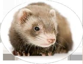 Vétérinaire nouveaux animaux de compagnie (NAC) Vienne vers Valence et Montélimar (26)